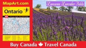 July is blossom month at Laveanne Lavender Fields